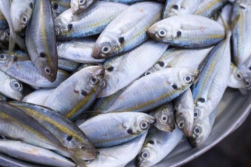Ini Cara Olah Ikan Kembung Jadi Sajian Sedap