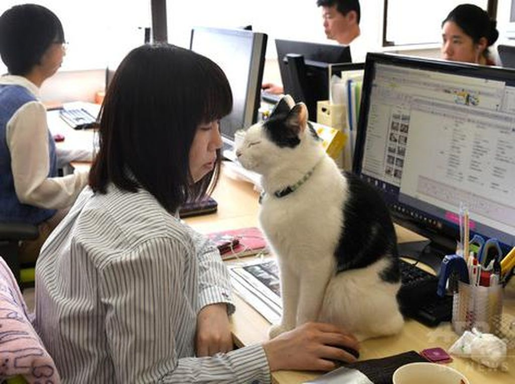 Cegah Stres, Kantor Ini Izinkan Pegawai Main dengan Kucing Saat Kerja