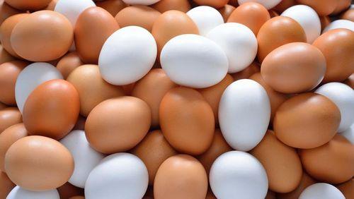 Bicara Soal Gizi, Telur Hewan Apa Yang Paling Kaya Manfaat?