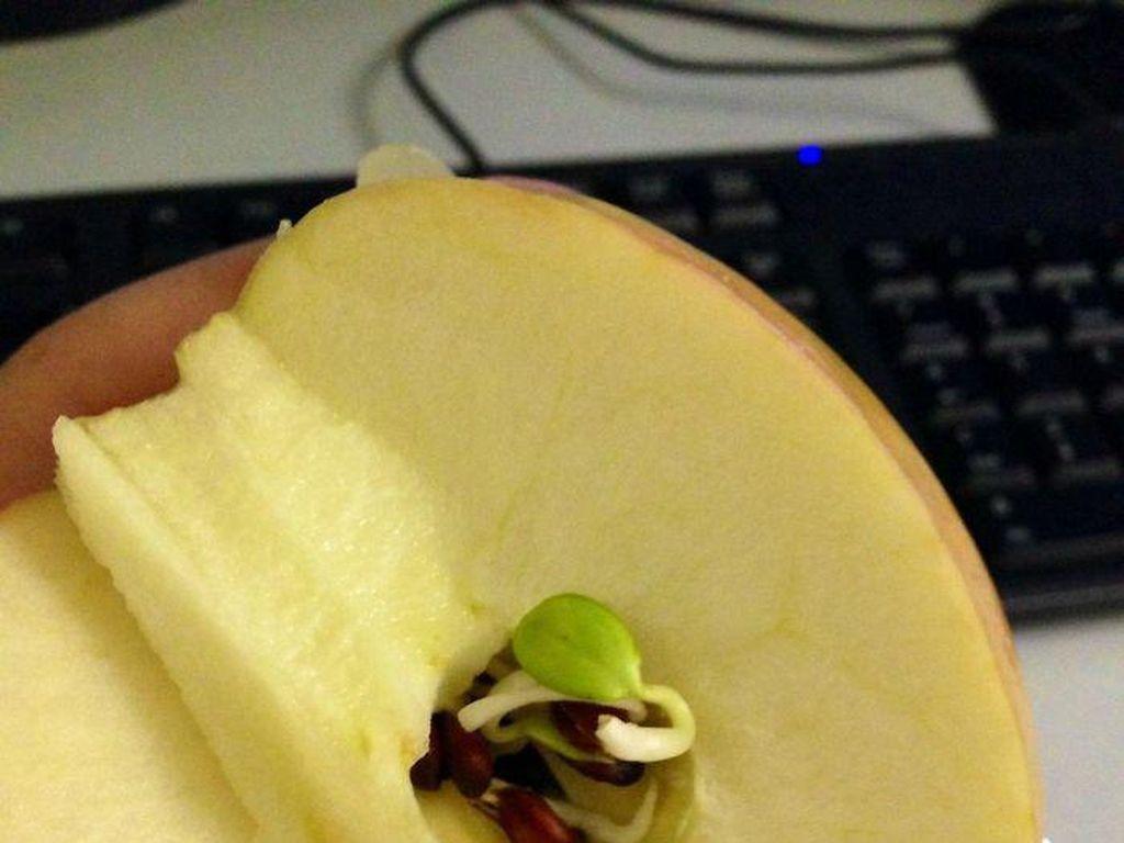 Apel ini tak biasa karena bijinya sudah berkecambah. Kira-kira kamu masih mau memakannya nggak ya? (Foto: Bored Panda)