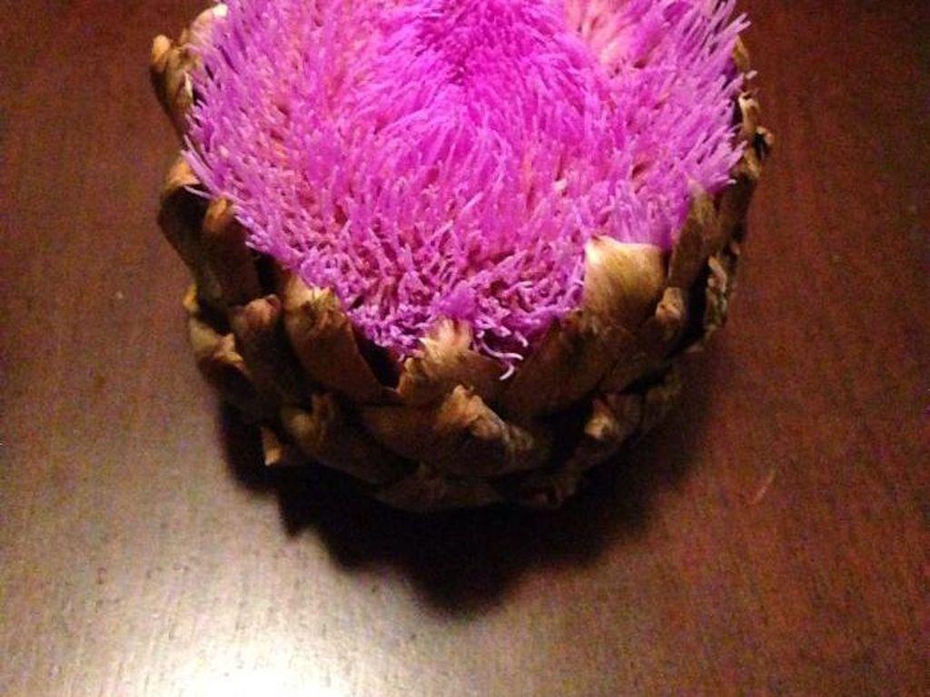 Artichoke adalah sayuran berbentuk kuncup bunga dengan kelopak berlapis. Tapi artichoke yang didiamkan di kulkas ini berbeda karena ditumbuhi serabut-serabut halus warna ungu terang di permukaannya. (Foto: Bored Panda)