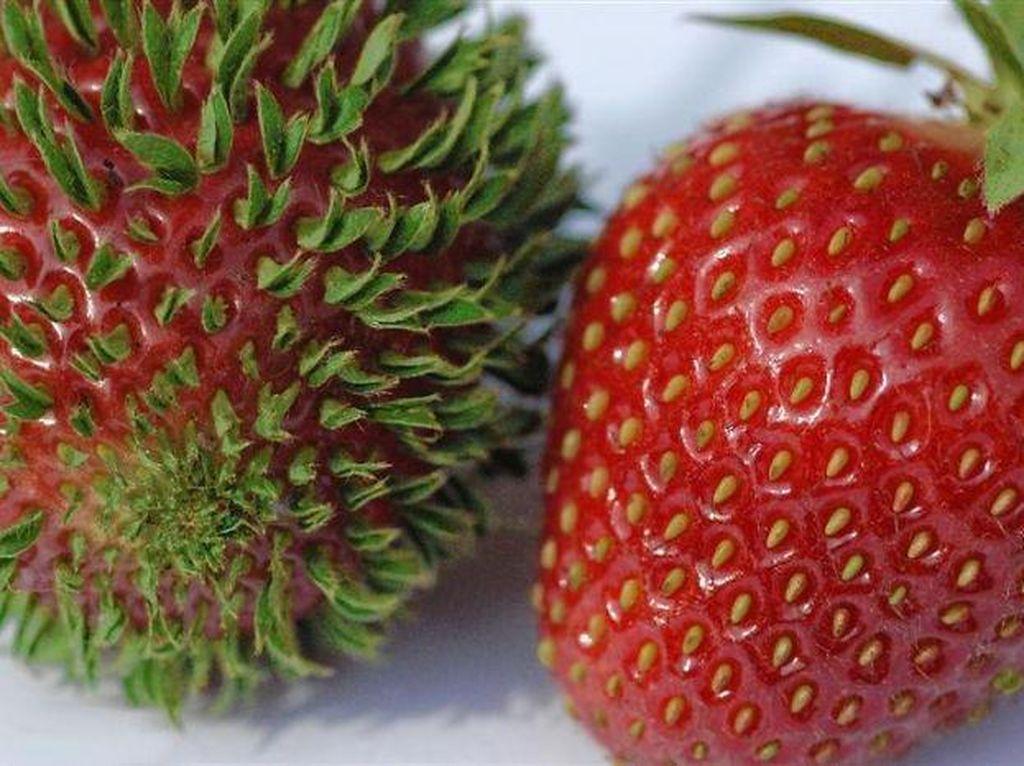 Ada juga biji-biji strawberry yang berkecambah. Bentuk biji yang tadinya butiran kini berubah jadi daun. Hiii, bikin ngeri ya? (Foto: Bored Panda)