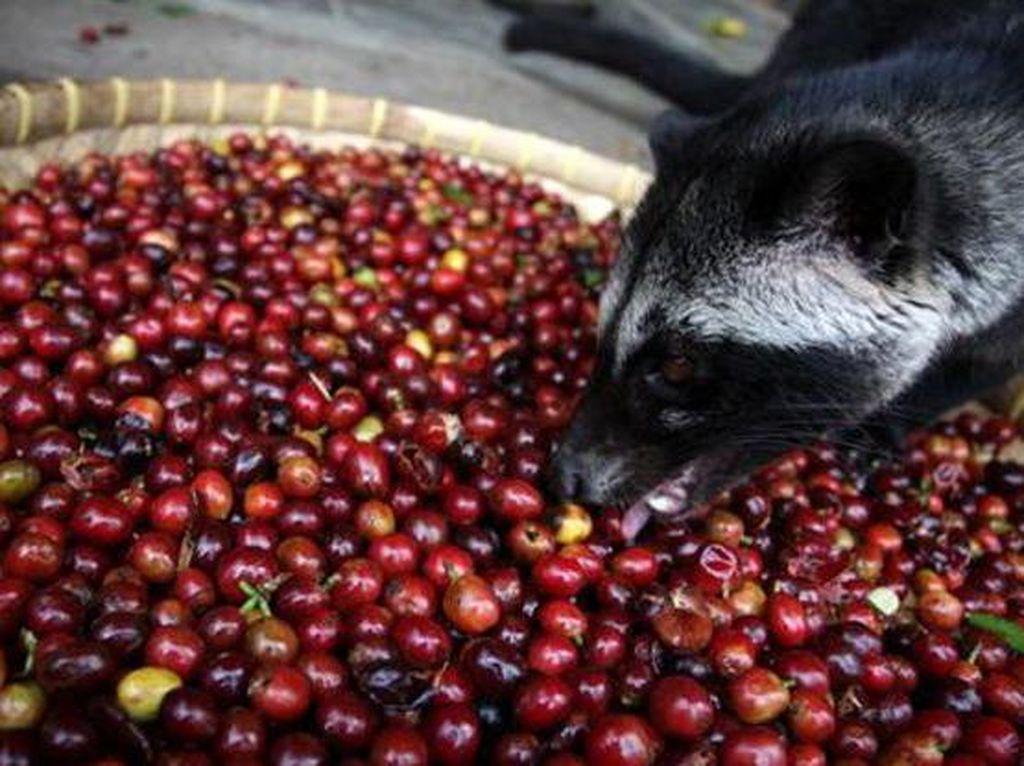 Enak Tapi Menjijikkan, 10 Makanan dan Minuman Ini Terbuat dari Kotoran hingga Air Liur Manusia (1)