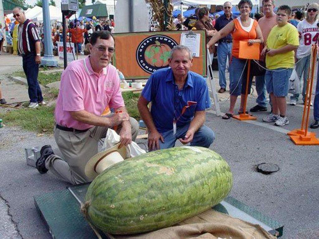 Lloyd Bright adalah salah satu orang yang beruntung karena bisa menumbuhkan semangka besar ini. Meskipun tidak mengejutkan baginya, tapi semangka terbesar ini sudah menetapkan rekor dunia sejak tahun 1979 dengan bobot seberat 122 Kg. Foto: Istimewa