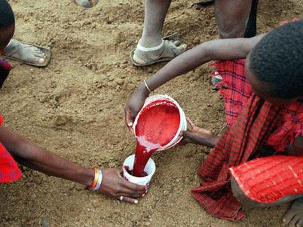 Orang Samburu di Kenya mengonsumsi darah hewan selama berabad-abad. Biasanya darah dicampur dengan susu untuk menghasilkan minuman kaya nutrisi. Foto: Istimewa