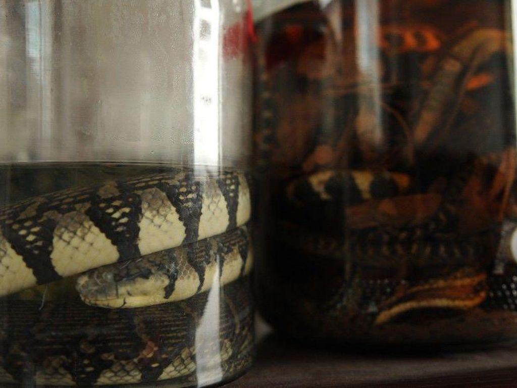 Di China juga ada rice wine dengan campuran darah ular yang dianggap punya efek afrodisiak. Salah satu penjualnya ada di peternakan ular desa Zisiqiao, China timur. Foto: Istimewa