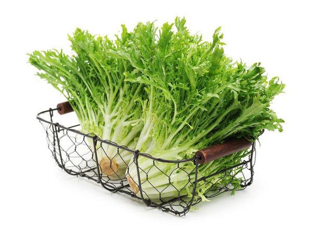 Chicory merupakan tanaman sejenis sayuran yang memilik kandungan nutrisi terbaik untuk tubuh seperti thiamin, niasin, dan seng. Foto: Getty Images