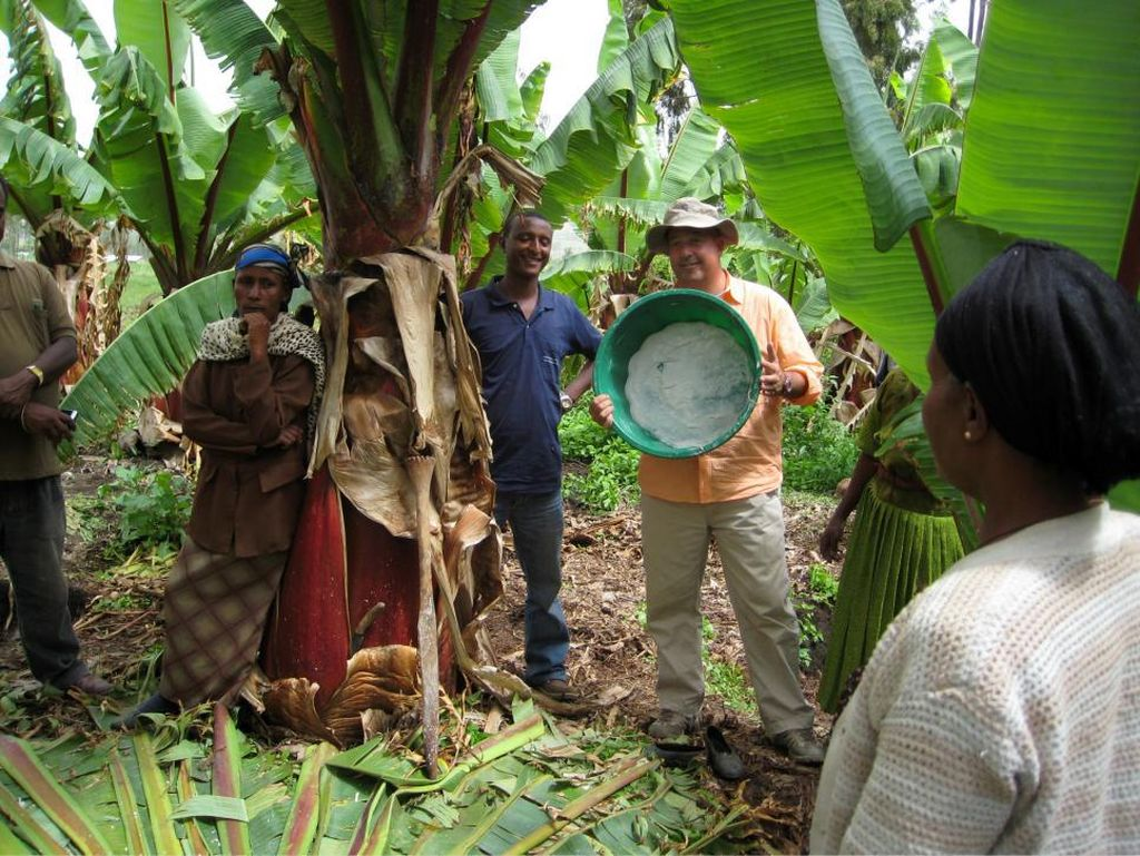 Ensete merupakan salah satu dari dua spesies vinirea, bagian dari keluarga pisang palsu di Etiopia. Sajian makanan ini dibuat dari pohon pisang yang ditumbuk sampai halus.